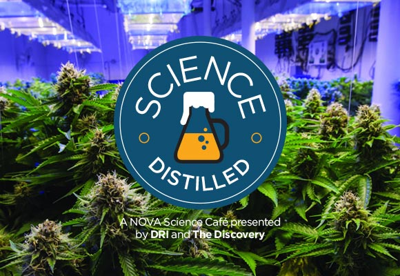 Science Distilled: Cannabis & Air Pollution